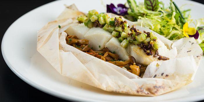 Paper-bag Fish