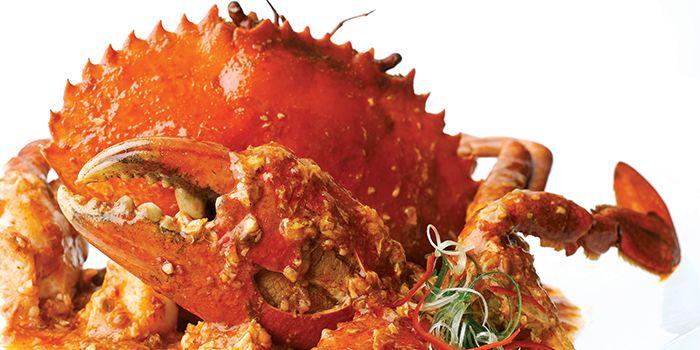Award Winning Singapore Chilli Crab from JUMBO Seafood @ IFC in Pudong, Shanghai