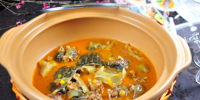 Braised turtle of MOTT539 located near Sinan Lu, Shanghai