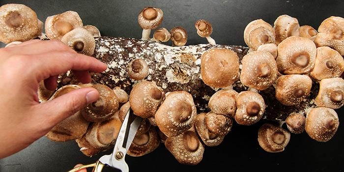 Fresh mushrooms from Qimin Organic Hotpot Marketplace (Reel) located in Jing