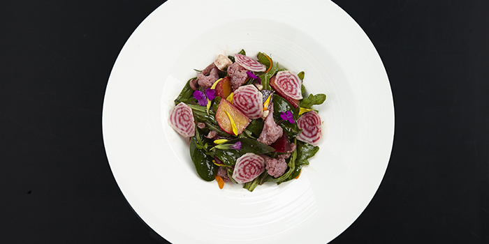 Salad from FED by JULY located in Xuhui, Shanghai