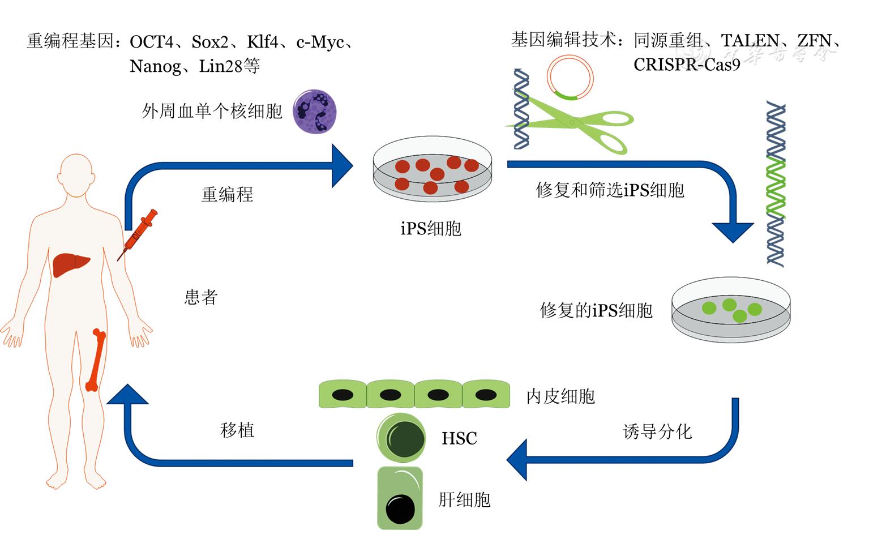 遗传病治疗_血友病A基因治疗的研究进展 - 中华血液学杂志