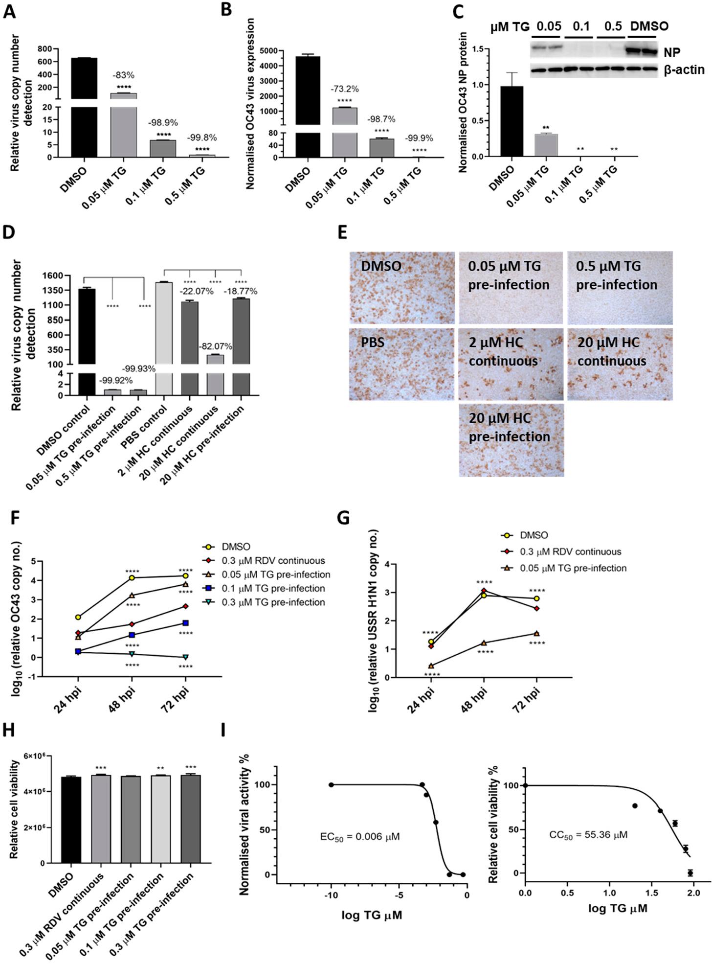 TG抑制OC43病毒的转录和蛋白质的产生,作为抗病毒剂比羟氯喹和瑞姆昔韦更有效,并且显示出高选择性。 .png
