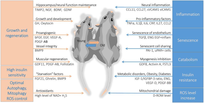 共生生物小鼠模型.png