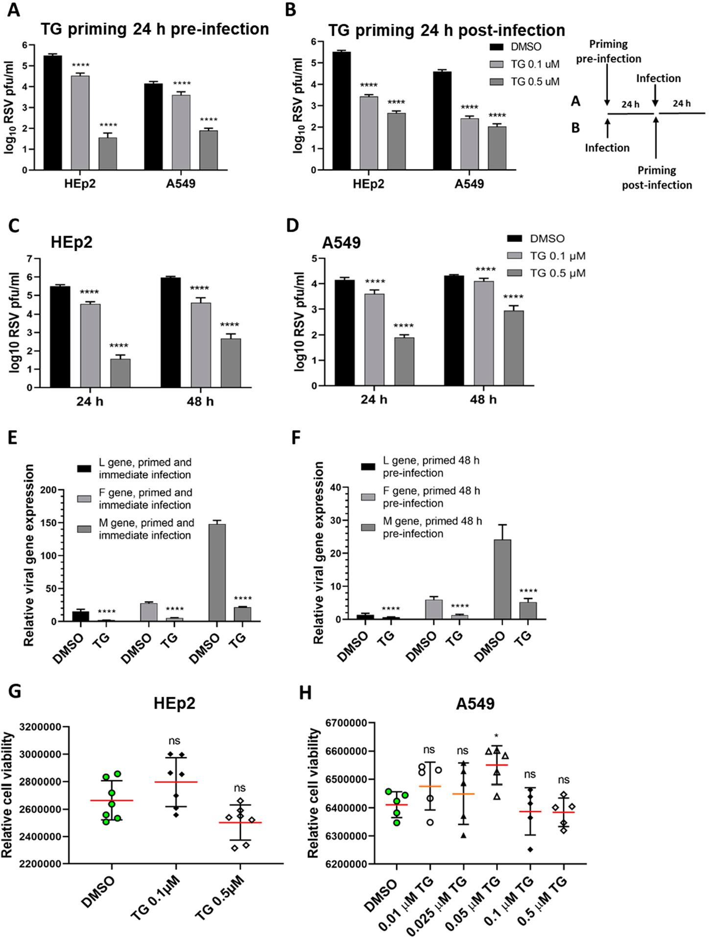 thapsigargin(TG)在无细胞毒性水平下短时间(30分钟)暴露于人细胞,迅速引起延长的(≥48h)抗病毒状态,从而阻止了RSV复制。.png