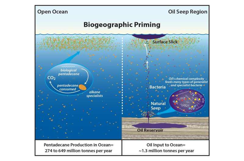 在海洋中循环的十五烷的数量使石油中碳氢化合物的输入相形见war.png