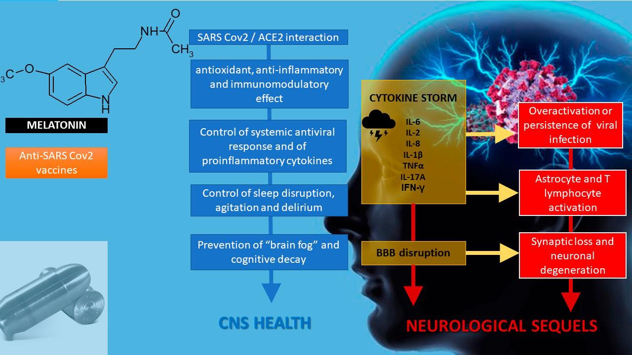 褪黑素可能通过干扰SARS-CoV-2 /血管紧张素转换酶2的缔合而具有抗病毒活性。.png