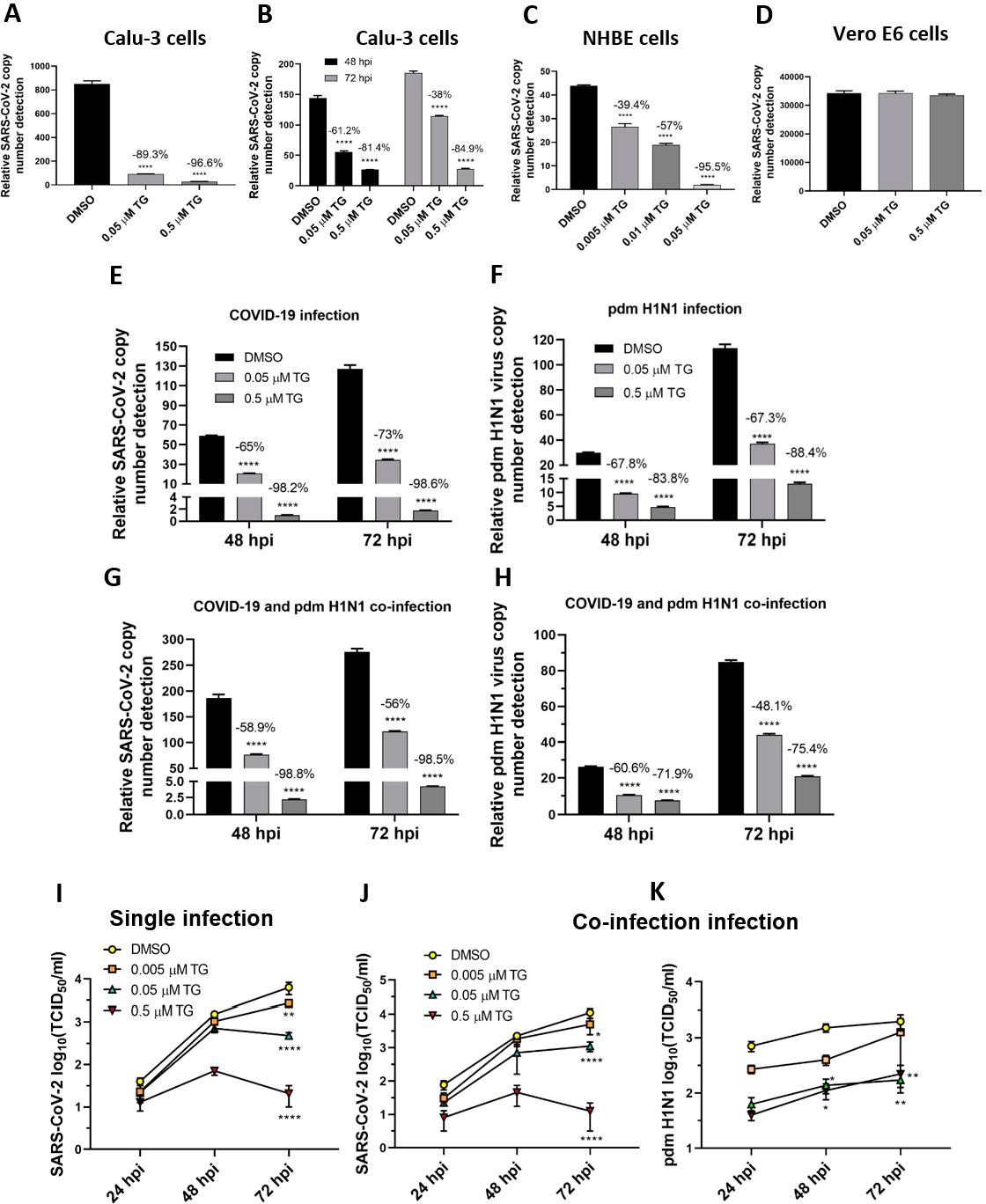 在单病毒感染和与pdm H1N1病毒共感染中,TG有效地阻止了子代SARS-CoV-2的产生。.png