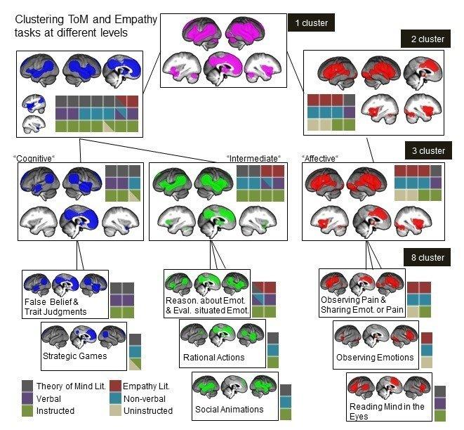 """社会技能""""移情""""(红色大脑区域)和""""视角改变""""(蓝色大脑区域)是层次结构的。它们由各种单独的组件组成.jpg"""