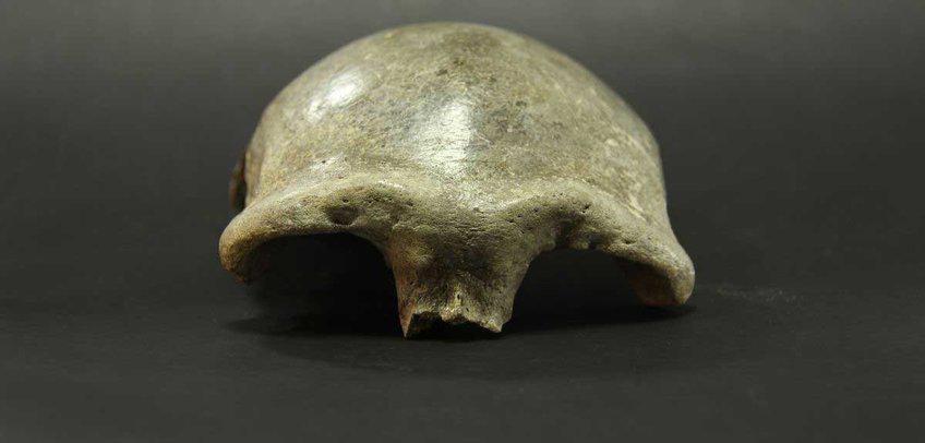 在蒙古东部的索尔基特山谷发现的黄cap属于一个活在34,000年前的女性.png