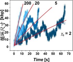 回路尺寸显示为Cohyin环和染色质纤维γc= 2,5,200和200之间的四个摩擦设置的时间依赖性.jpg