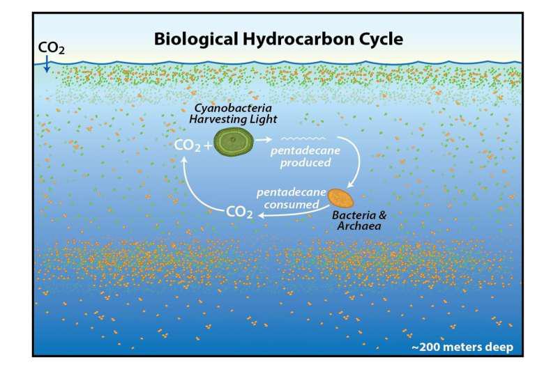 在海洋的上层生产并消耗了大量的十五烷.png