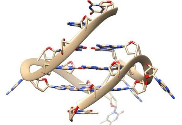 四重螺旋DNA.png