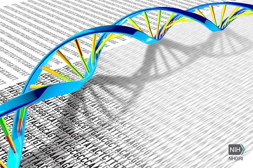 DNA双螺旋位于DNA字母A,T,C和G的打印插图上.png
