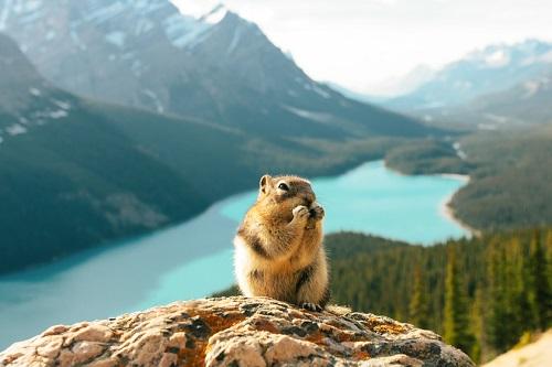 Jasper National Park 2 days Tour